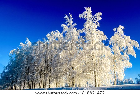 Winter snow covered trees view. Snow covered winter trees