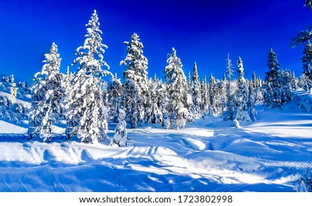 Winter snow fir tree forest landscape. Snowy winter fir tree forest view. Winter snow forest landscape