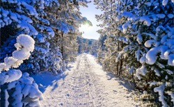 Winter snow fir tree forest road in rural wintry woods