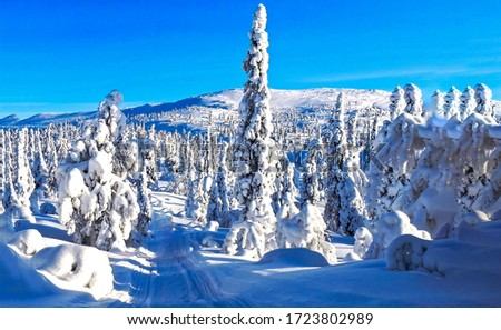 Winter snow fir tree forest trail landscape