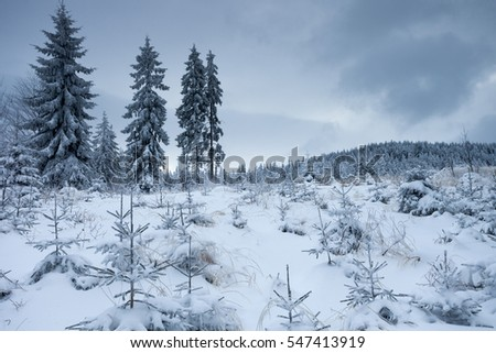 Winter snow forest   #547413919