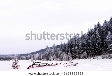 Winter snow forest landscape view