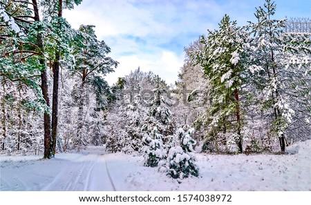 Winter snow forest landscape. Winter forest tree landscape. Snowy winter forest scene. Winter snow scene