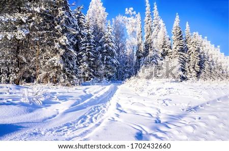 Winter snow forest path landscape. Winter forest snow landscape. Winter forest background