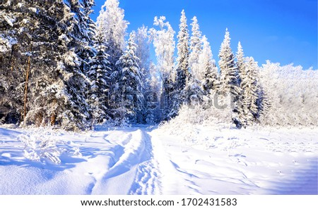 Winter snow forest path view. Path in winter forest snow