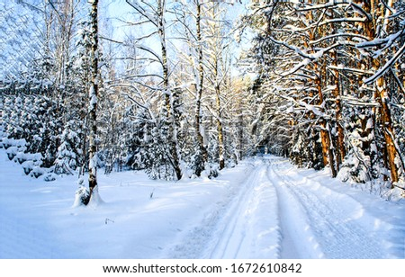 Winter snow forest road landscape. Winter forest road snow. Snowy winter forest road. Winter forest road view
