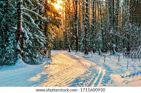 Winter snow forest road sunset. Winter sunset road in forest. Forest road in winter sunset scene