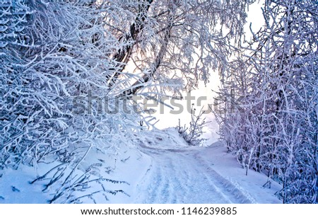Winter snow forest road turn landscape. Snow winter forest road turn view. Winter forest snow road scene
