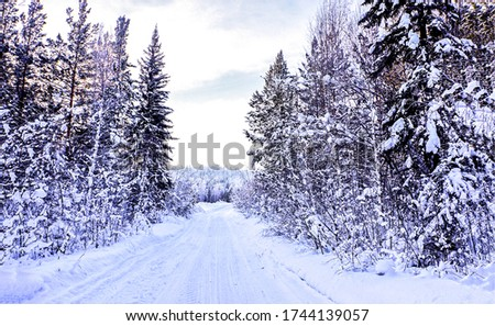 Winter snow forest road view