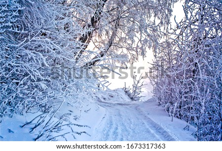 Winter snow forest road view. SNowy winter forest road. Winter snow forest road turn. Turn left in winter snow forest