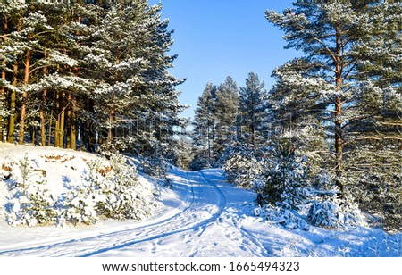 Winter snow forest road view. Winter forest road snow scene. Winter snow forest road
