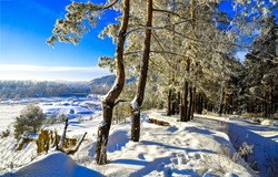 Winter snow forest scene. Pine tree forest in winter snow season. Winter snow forest scene. Winter snow scene