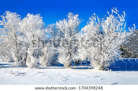 Winter snow forest scene. Snow covered trees. Winter snow nature trees view