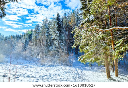 Winter snow forest scene. Snow winter forest landscape. Winter snow forest landscape