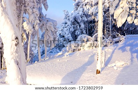 Winter snow forest scene view