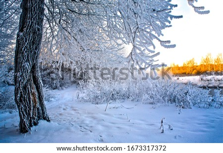 Winter snow forest scene view. Winter snow scene. Snowy winter forest tree branch. Winter snow tree view