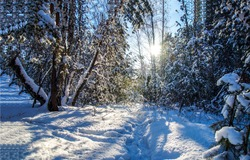Winter snow forest sunset lights. Snowy winter forest sunset. Sunset in winter snow forest. WInter sunset forest snow