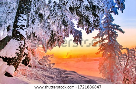 Winter snow forest sunset scene. Sunset winter snow scene. Winter sunset forest tree branches