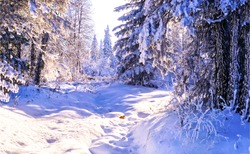 Winter snow forest sunset scene. Winter snow forest scene. Winter snow forest landscape. Winter snow scene in forest