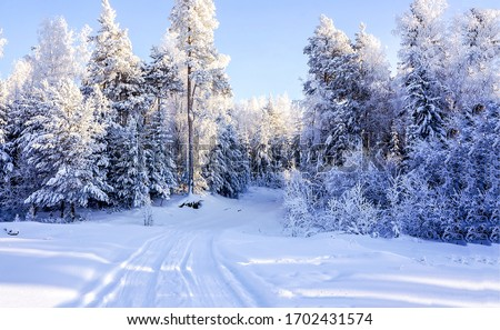 Winter snow forest trail landscape. Winter snow forest. Snowy winter forest view