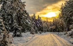 Winter snow forest trail sunset scene. Winter forest snow at sunset. Sunset winter snow forest. Winter sunset in snowy forest