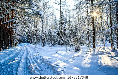 Winter snow forest trail sunset view. Winter snow forest sunset scene. Sunset in winter snow forest
