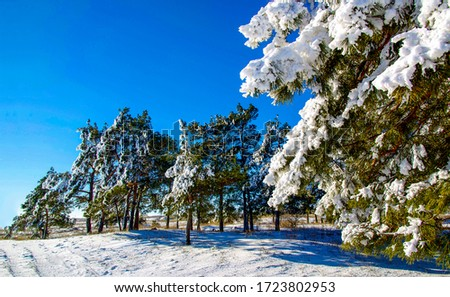 Winter snow forest tree branch