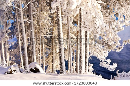 Winter snow forest tree trunks