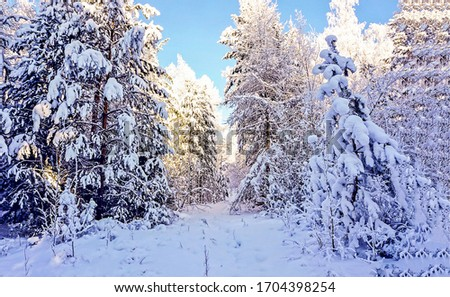 Winter snow forest trees background.  Forest win winter snow. Winter snow forest