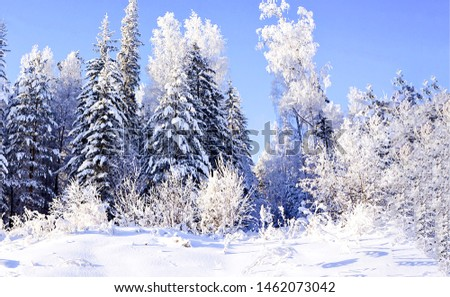 Winter snow forest trees background. Snowy winter forest scene. Winter snow forest view. Winter forest snow landscape