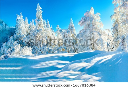Winter snow forest trees landscape. Snowy winter forest scene. Winter snow forest scene. Snow covered winter forest trees