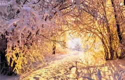 Winter snow forest trees tunnel sunset view. Sunset winter snow forest tunnel scene. Winter snow forest trees tunnel sunset background. Sunset winter snow forest tunnel
