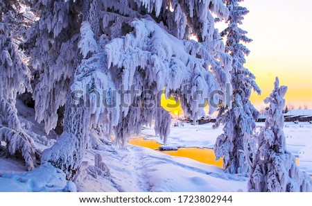 Winter snow forest trees view. Snow covered winter tree branches. Winter snow sunset scene. Winter snow scene