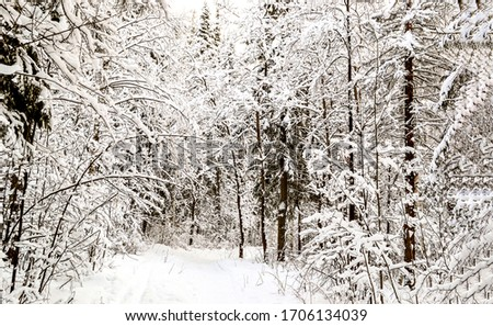 Winter snow forest trees view. Snowy winter forest