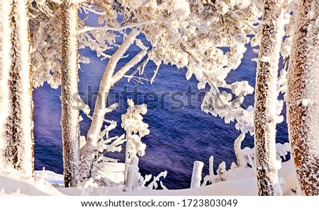Winter snow forest trees water background