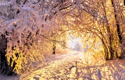 Winter snow forest tunnel sunset view. Sunset winter forest tunnel trees. Sunset in winter forest. Winter sunset trees tunnel