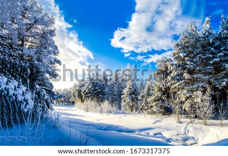 Winter snow nature forest landscape. Winter nature forest snow landscape. Winter snow nature scene. Winter forest snow view