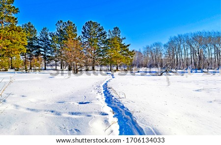 Winter snow nature path landscape. Winter nature snow path. Path snow in winter nature scene