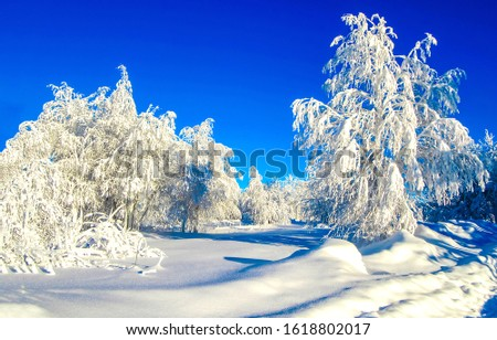 Winter snow nature scene. Snowy winter forest view. Winter snow forest landscape. Winter snow nature