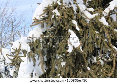 Winter snow scenes