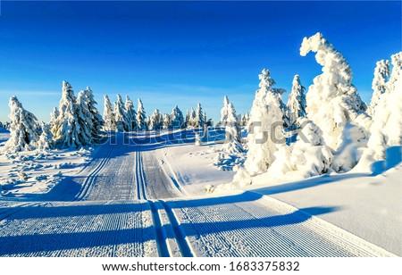 Winter snow ski track view. Ski track in winter snow forest. Winter ski track snow scene. Ski track winter snow