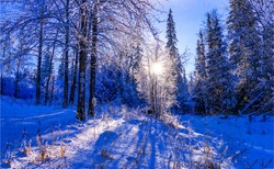 Winter snow sunset forest landscape. Sunset winter snow forest
