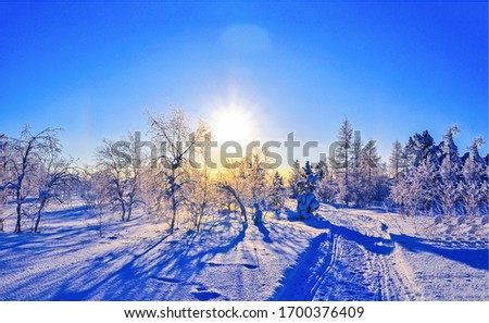 Winter snow sunset forest landscape. WInter sunset snow scene. Sunset in winter snow