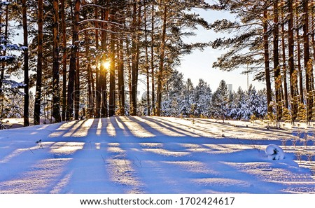 Winter snow sunset forest trees background. Sunset winter snow forest trees