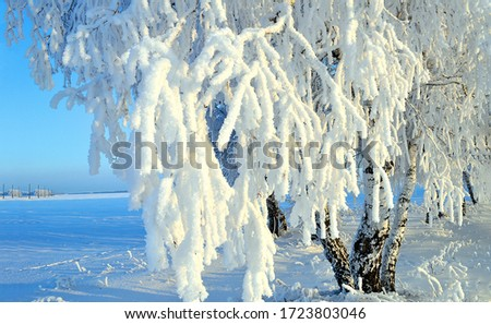 Winter snow tree branch view