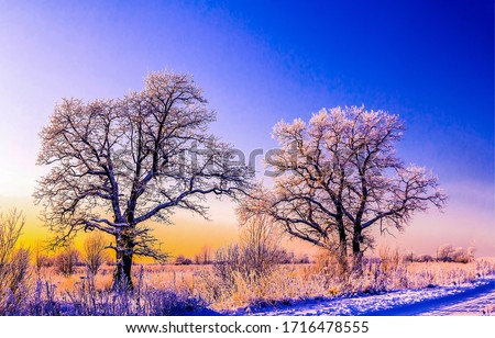 Winter snow trees in sunset. Winter sunset snow covered trees. Winter sunset scene. Winter nature sunset trees