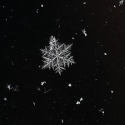 Winter snowflakes magnified. Snowflakes on a dark background.