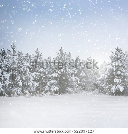 Winter snowy evening in holiday forest #522837127