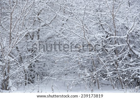 Winter snowy trees and grass background. Snow landscape with trees backdrop Good cold weather outdoor or outside