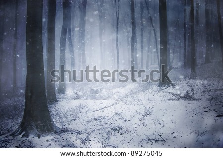 winter storm in a forest in winter